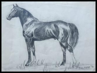 teenage-horse-drawing